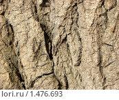 Кора дерева. Стоковое фото, фотограф Гузынин Тимофей / Фотобанк Лори