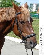 Лошадка. Стоковое фото, фотограф Гузынин Тимофей / Фотобанк Лори