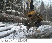 Погрузка леса. Стоковое фото, фотограф Валерий Нестеров / Фотобанк Лори