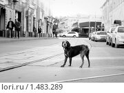 Купить «Одинокая собака на улице Москвы», фото № 1483289, снято 21 октября 2019 г. (c) Алексей Хромушин / Фотобанк Лори