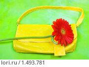 Женская сумочка и красный цветок. Стоковое фото, фотограф Дарья Филимонова / Фотобанк Лори
