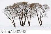 Ивы на берегу озера. Стоковое фото, фотограф Александр Щепин / Фотобанк Лори