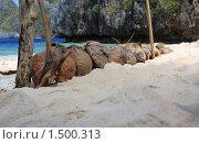 Купить «Кокосы на пляже», фото № 1500313, снято 7 января 2010 г. (c) Кирилл Трифонов / Фотобанк Лори