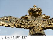 Купить «Орел на ограде Спасо-Преображенского собора. Санкт-Петербург», эксклюзивное фото № 1501137, снято 20 августа 2009 г. (c) Александр Щепин / Фотобанк Лори