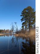 Купить «Весна, лесное озеро в Карелии», фото № 1501413, снято 2 мая 2009 г. (c) Max Toporsky / Фотобанк Лори