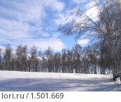 Небо и березы. Стоковое фото, фотограф Станислав Горбачев / Фотобанк Лори