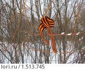 Купить «Георгиевская ленточка на кусту вербы», фото № 1513745, снято 28 февраля 2010 г. (c) Плотников Михаил / Фотобанк Лори