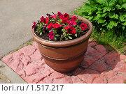 Купить «Вазон с цветами», эксклюзивное фото № 1517217, снято 5 июня 2009 г. (c) lana1501 / Фотобанк Лори