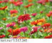Цветок с бабочкой. Стоковое фото, фотограф Яков Козарез / Фотобанк Лори