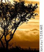 Дерево. Стоковое фото, фотограф Артем Сорокин / Фотобанк Лори