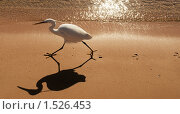 Цапля на берегу моря. Стоковое фото, фотограф Калинина Алиса / Фотобанк Лори