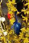 Пасхальное яйцо на атласной ленточке висит на цветущей ветке, фото № 1529033, снято 12 марта 2008 г. (c) Анна Мартынова / Фотобанк Лори