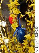 Купить «Пасхальное яйцо на атласной ленточке висит на цветущей ветке», фото № 1529033, снято 12 марта 2008 г. (c) Анна Мартынова / Фотобанк Лори