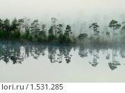 Купить «Туманный берег озера в лесу», фото № 1531285, снято 12 июня 2009 г. (c) Кекяляйнен Андрей / Фотобанк Лори
