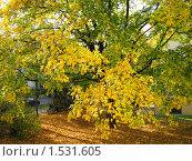 Осень. Стоковое фото, фотограф Сергей Романюк / Фотобанк Лори