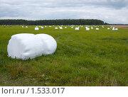 Купить «Упакованное в плёнку сено», фото № 1533017, снято 9 августа 2009 г. (c) Юрий Синицын / Фотобанк Лори