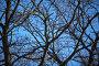 Крона дуба на фоне голубого неба, фото № 1536693, снято 8 марта 2010 г. (c) Валерий Торопов / Фотобанк Лори