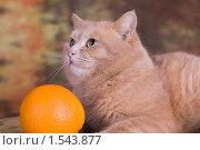 Рыжий кот с апельсином. Стоковое фото, фотограф Дмитрий Милехин / Фотобанк Лори