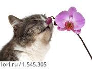 Купить «Кошка и орхидея», фото № 1545305, снято 21 марта 2009 г. (c) Наталья Бидюкова / Фотобанк Лори