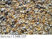 Ракушки. Стоковое фото, фотограф Сергей  Мацнев / Фотобанк Лори