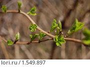 Купить «Весна идёт! Весне - дорогу!», фото № 1549897, снято 1 мая 2009 г. (c) Елена Ильина / Фотобанк Лори