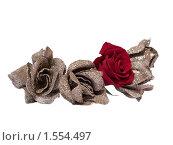 Розы, изолированно на белом фоне. Стоковое фото, фотограф Диана Гарифуллина / Фотобанк Лори