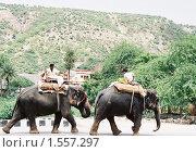 Купить «Слоны на улице Джайпура», эксклюзивное фото № 1557297, снято 22 октября 2018 г. (c) Free Wind / Фотобанк Лори