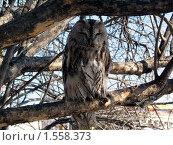 Сова в ветвях дерева. Стоковое фото, фотограф Надежда Курило / Фотобанк Лори