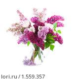Купить «Букет с сиренью и тюльпанами на белом фоне», фото № 1559357, снято 28 мая 2009 г. (c) Елена Блохина / Фотобанк Лори