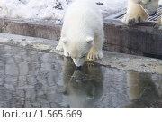 Купить «Медвежонок», фото № 1565669, снято 11 марта 2010 г. (c) Яременко Екатерина / Фотобанк Лори