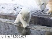 Купить «Медвежонок», фото № 1565677, снято 11 марта 2010 г. (c) Яременко Екатерина / Фотобанк Лори
