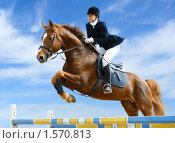 Купить «Конкур - молодая девушка прыгает на лошади через барьер», фото № 1570813, снято 16 мая 2009 г. (c) Абрамова Ксения / Фотобанк Лори