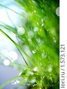Зеленая трава. Стоковое фото, фотограф Мария Калиниченко / Фотобанк Лори