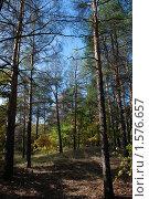 Осенний лес. Стоковое фото, фотограф владимир самохин / Фотобанк Лори