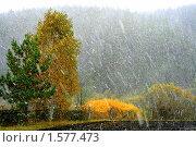 Первый снег. Стоковое фото, фотограф Одиноких Андрей Аркадьевич / Фотобанк Лори