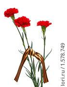 Купить «Красные гвоздики с георгиевской ленточкой», фото № 1578749, снято 24 марта 2010 г. (c) Наталья Волкова / Фотобанк Лори