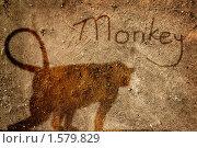 Купить «Поверхность стены с изображением обезьяны в стиле гранж», фото № 1579829, снято 9 декабря 2009 г. (c) Вера Тропынина / Фотобанк Лори