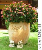 Купить «Вазон с цветами», фото № 1580181, снято 21 ноября 2009 г. (c) Светлана Степачёва / Фотобанк Лори