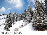 Зимний пейзаж. Стоковое фото, фотограф Алексей Кузнецов / Фотобанк Лори