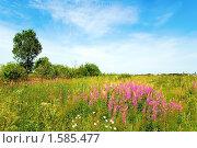 Купить «Летний пейзаж», фото № 1585477, снято 12 июля 2008 г. (c) Катыкин Сергей / Фотобанк Лори