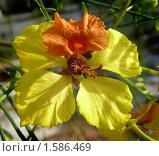 Цветок-бабочка. Стоковое фото, фотограф Valentina Dimitrova / Фотобанк Лори