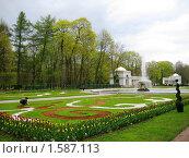 Оформление клумбы в Петродворце (2009 год). Редакционное фото, фотограф Светлана Степачёва / Фотобанк Лори