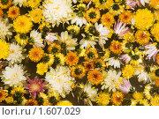 Купить «Фон из цветов», фото № 1607029, снято 13 мая 2009 г. (c) Ирина Игумнова / Фотобанк Лори