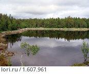 Пейзаж леса в Карелии. Стоковое фото, фотограф sfsfs / Фотобанк Лори
