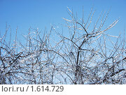 Купить «Зима. Лес. Снег», фото № 1614729, снято 26 января 2010 г. (c) Савельев Андрей / Фотобанк Лори
