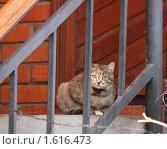 Кошка. Стоковое фото, фотограф Тучкина Любовь Владимировна / Фотобанк Лори