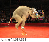 Купить «Выступление слона в цирке на Фонтанке. Санкт-Петербург», фото № 1619881, снято 10 апреля 2010 г. (c) Юлия Селезнева / Фотобанк Лори
