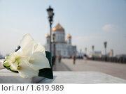 Цветы. Стоковое фото, фотограф Евгения Фурсова / Фотобанк Лори