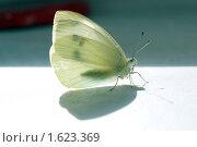 Купить «Бабочка и ее тень», фото № 1623369, снято 12 апреля 2010 г. (c) Валерий Лаврушин / Фотобанк Лори