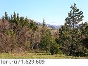 Купить «Горный лес», фото № 1629609, снято 14 мая 2009 г. (c) Юрий Брыкайло / Фотобанк Лори
